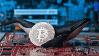 Whales Bought $3 Billion of Bitcoin When Its Price Fell, Says Chainalysis